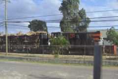 dominikanische-republik_zuckerrohr_308