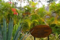 paradisus-palma-real-gartenanlage_4290