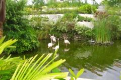paradisus-palma-real-gartenanlage_4293