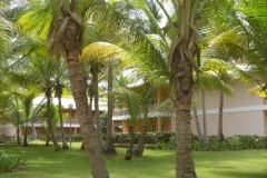 grand-palladium-palace-bungalows_3453