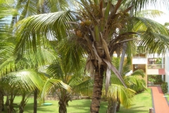 grand-palladium-punta-cana-bungalows_3684