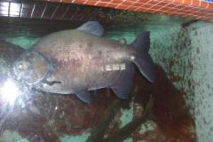 santo-domingo_das-aquarium034
