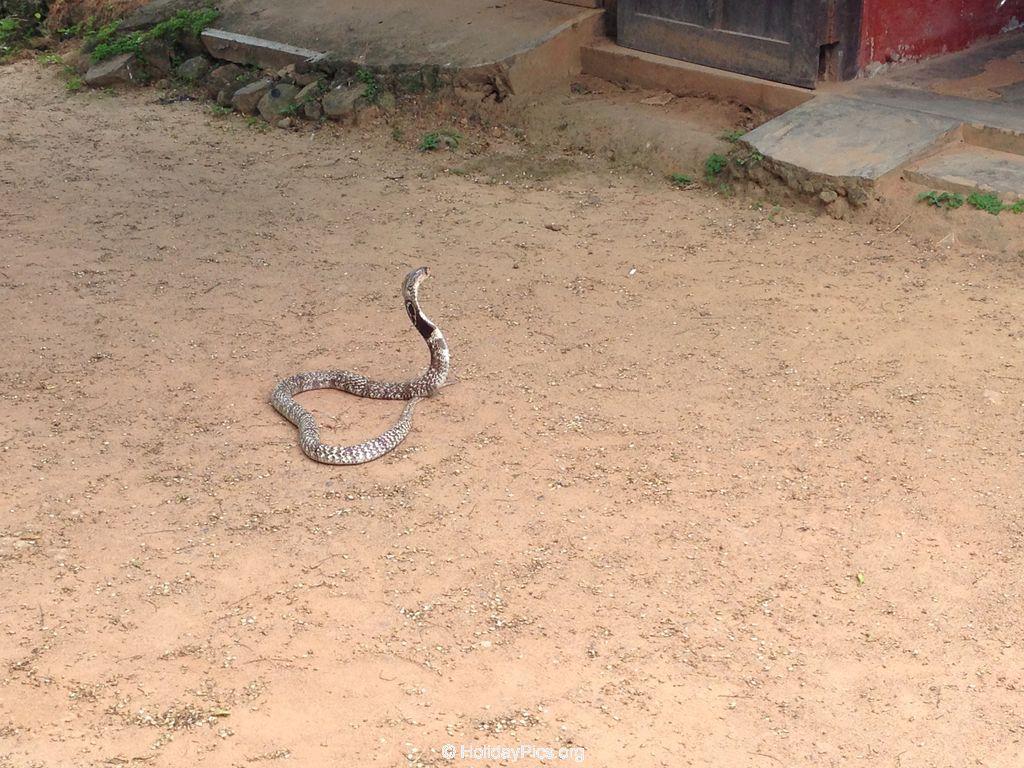 fotos snake farm telijjawila weligama sri lanka