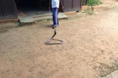 Snake_Farm-Weligama-008