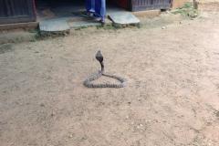 Snake_Farm-Weligama-009