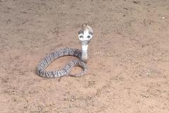 Snake_Farm-Weligama-014