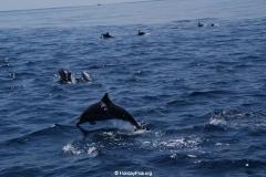 Sri Lanka Bericht Whale und Dolphin Watching