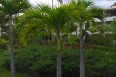 paradisus-palma-real-gartenanlage_4291