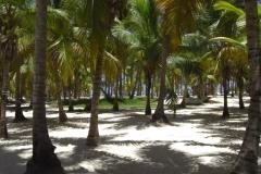 club-hotel-riu-bambu-strand_0782
