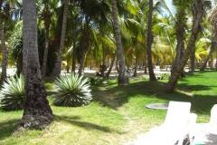 club-hotel-riu-bambu-strand_0830