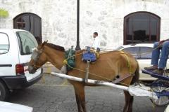 calle_de_las_damas_179