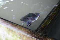 Sea Turtle Farm Habaraduwa