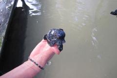 Sea-Turtle-Farm-Srilanka-024