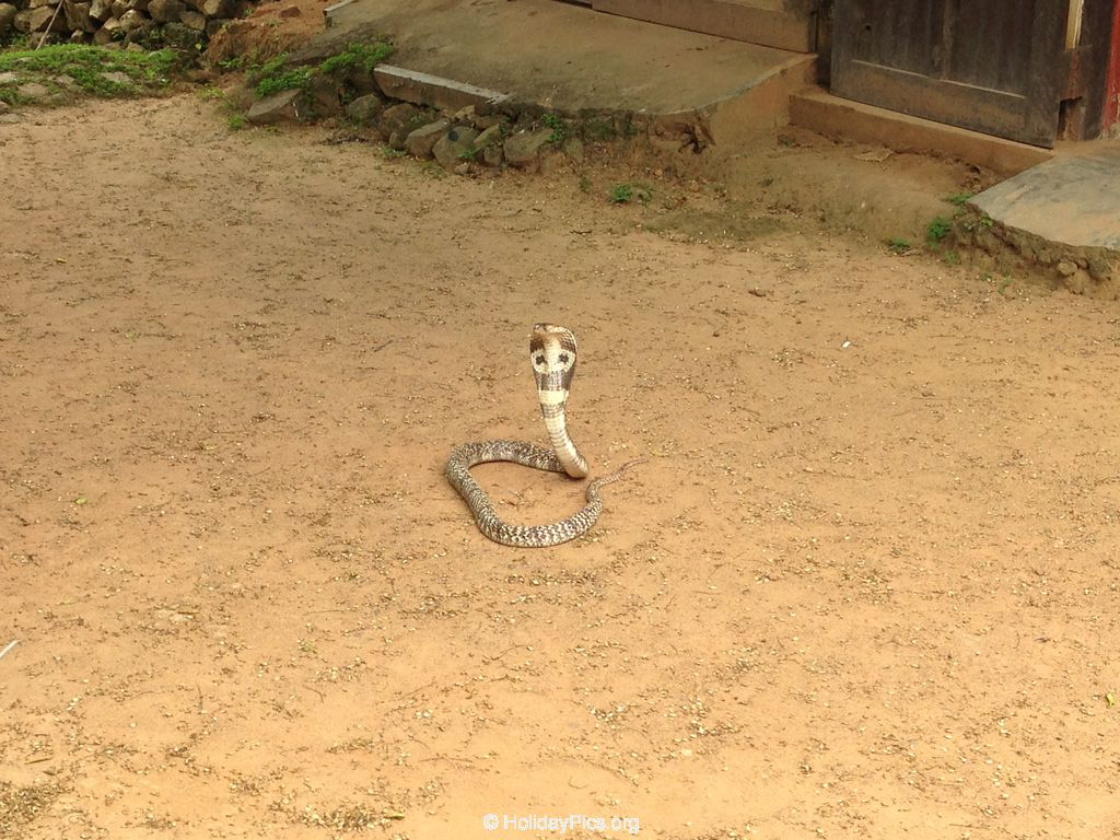 Snake_Farm-Weligama-012