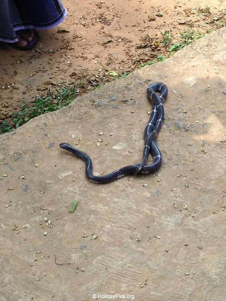 Snake_Farm-Weligama-030