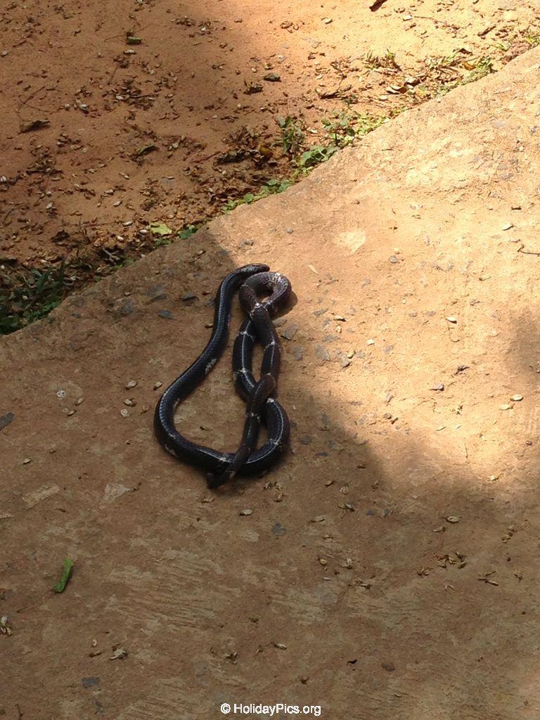 Snake_Farm-Weligama-031