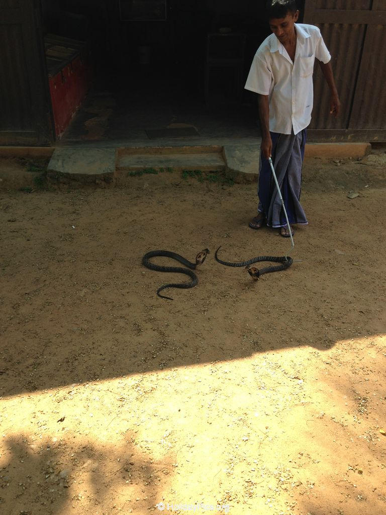 Snake_Farm-Weligama-046