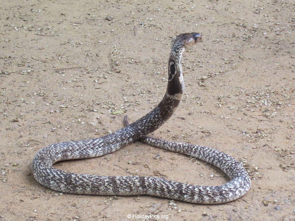 Snake_Farm-Weligama-058