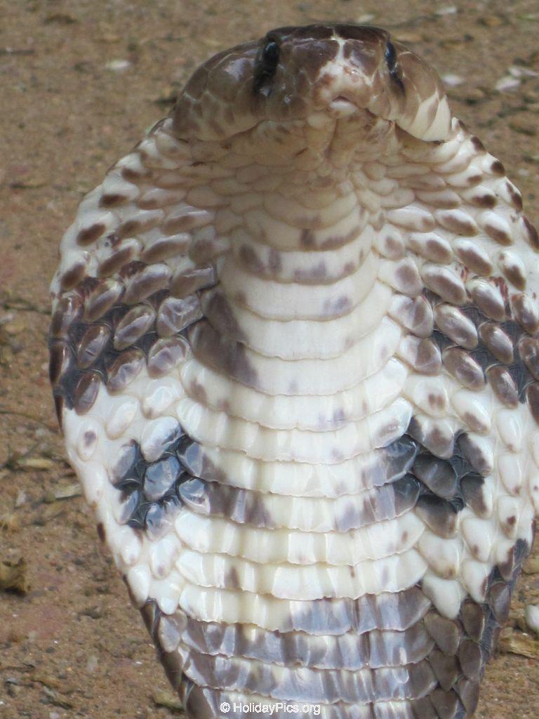 Snake_Farm-Weligama-062