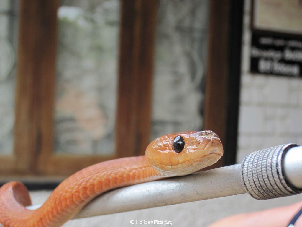 Snake_Farm-Weligama-089
