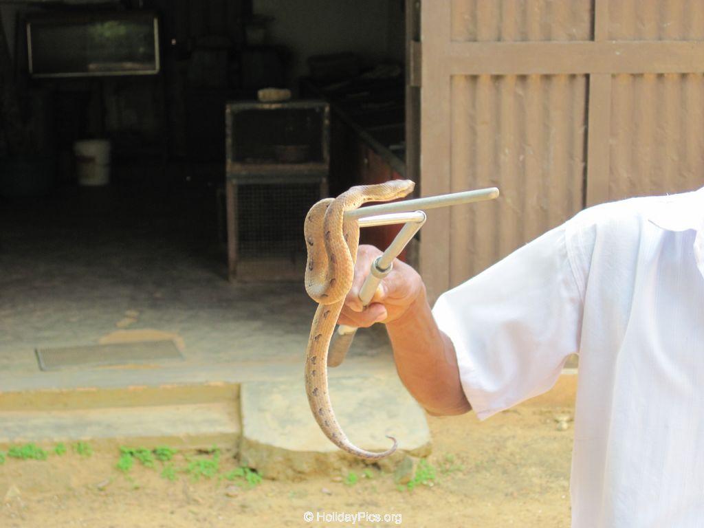 Snake_Farm-Weligama-092