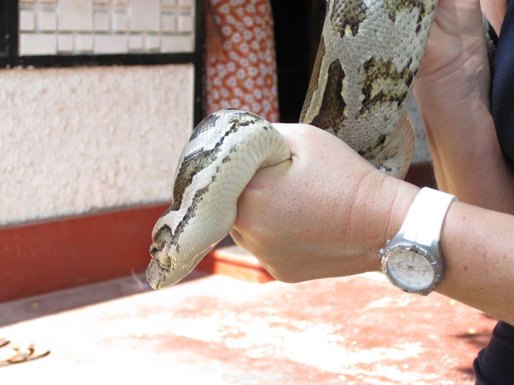 Snake_Farm-Weligama-095