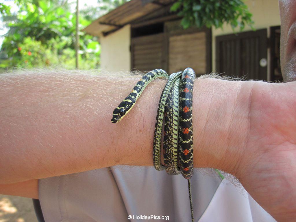 Snake_Farm-Weligama-103