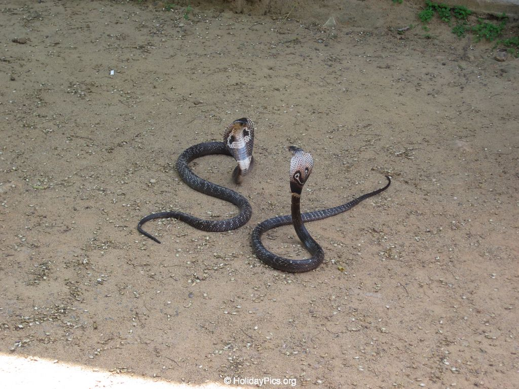 Snake_Farm-Weligama-105