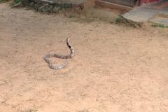 Snake_Farm-Weligama-011