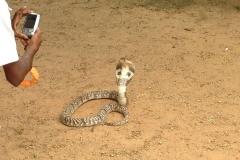 Snake_Farm-Weligama-013