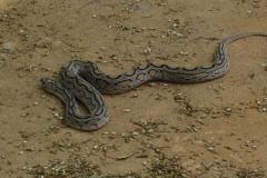 Snake_Farm-Weligama-063