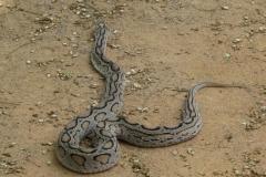 Snake_Farm-Weligama-064