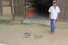 Snake_Farm-Weligama-104