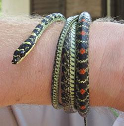 Snake Farm Sri Lanka